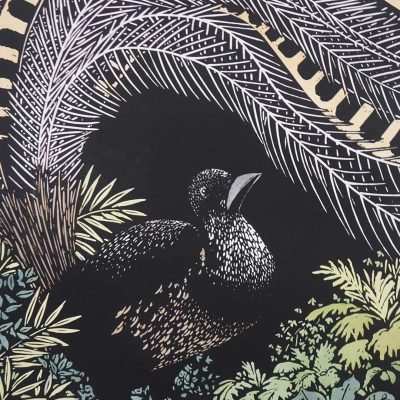 David preston lyrebird print